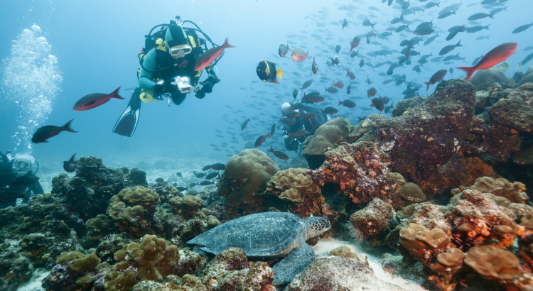 Best Scuba Diving Locations In The World - The 10 best scuba diving locations in the world
