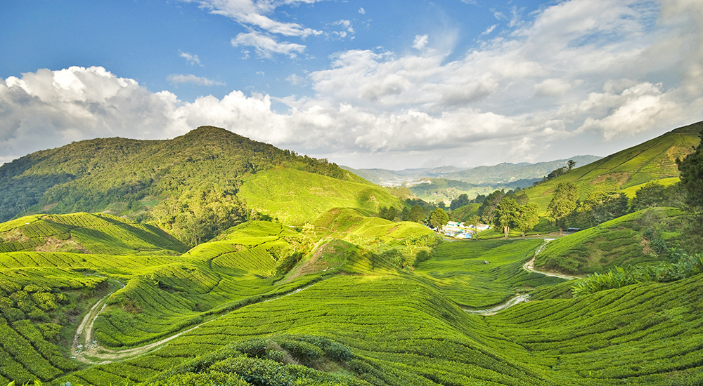 Stunning Peaks 5 Best Mountains To Climb In Malaysia