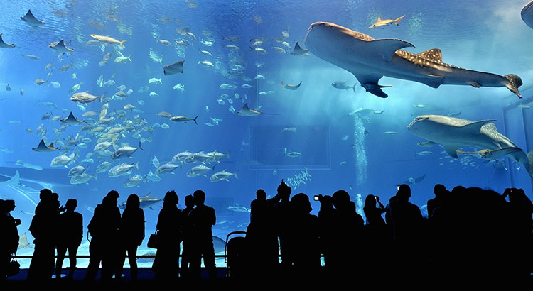 Travel Asia S Top 10 Aquariums For Tourists To Visit